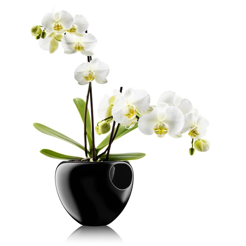 Naplňte nádobu vodou a nemusíte se o rostlinu starat. Vodu si bere sama díky nylonovému knotu, který funguje jako kořeny.